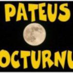 Pateus Nocturnus
