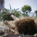 Retirada de palmeras IES Haría (1)