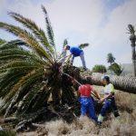 Retirada de palmeras IES Haría (3)